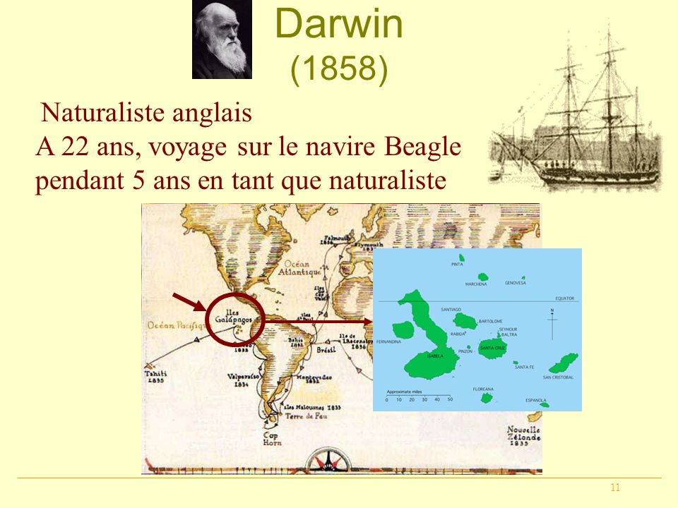 Darwin (1858) Naturaliste anglais