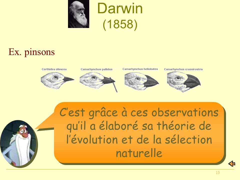 Darwin (1858) Ex. pinsons.