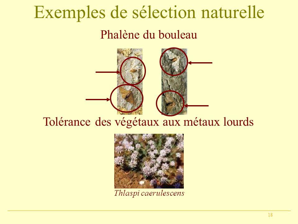 Exemples de sélection naturelle