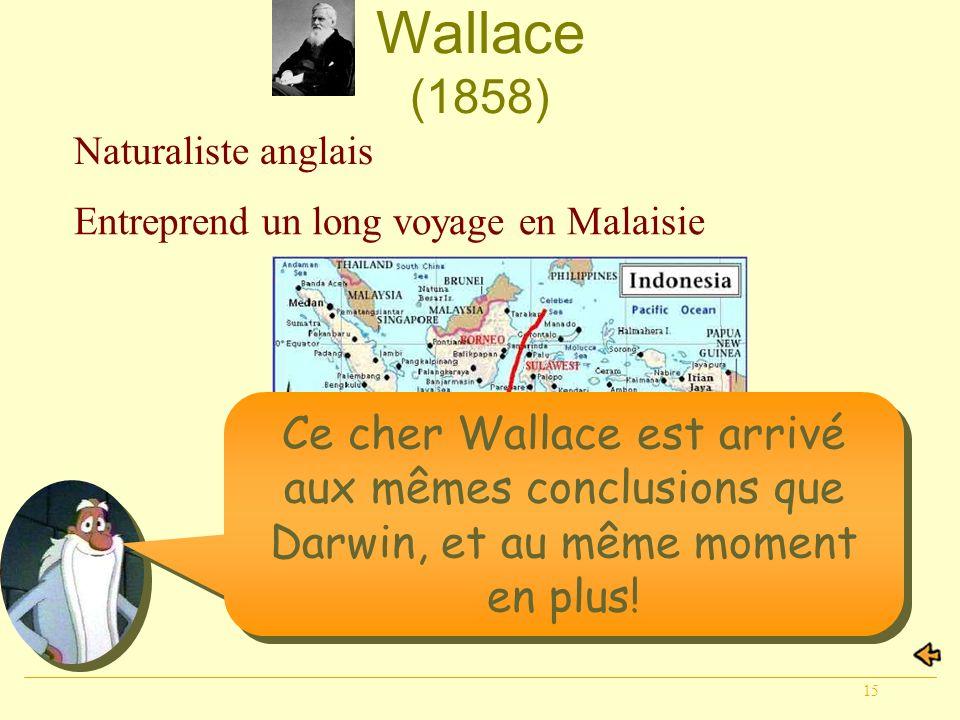 Wallace (1858) Naturaliste anglais. Entreprend un long voyage en Malaisie.