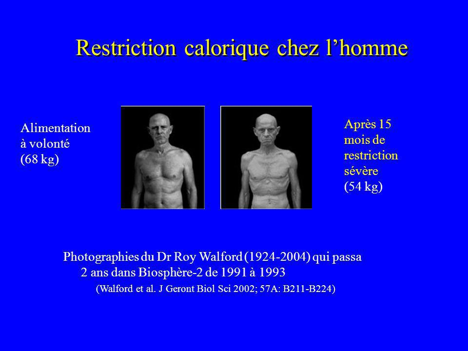 Restriction calorique chez l'homme