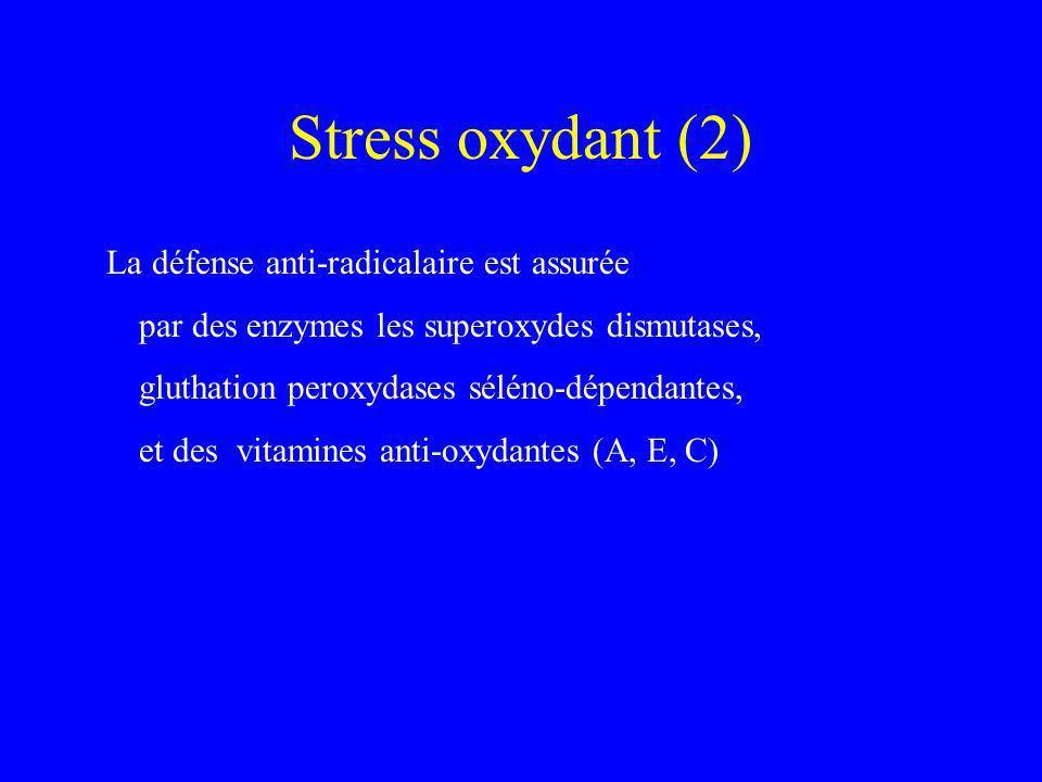 Stress oxydant (2) La défense anti-radicalaire est assurée