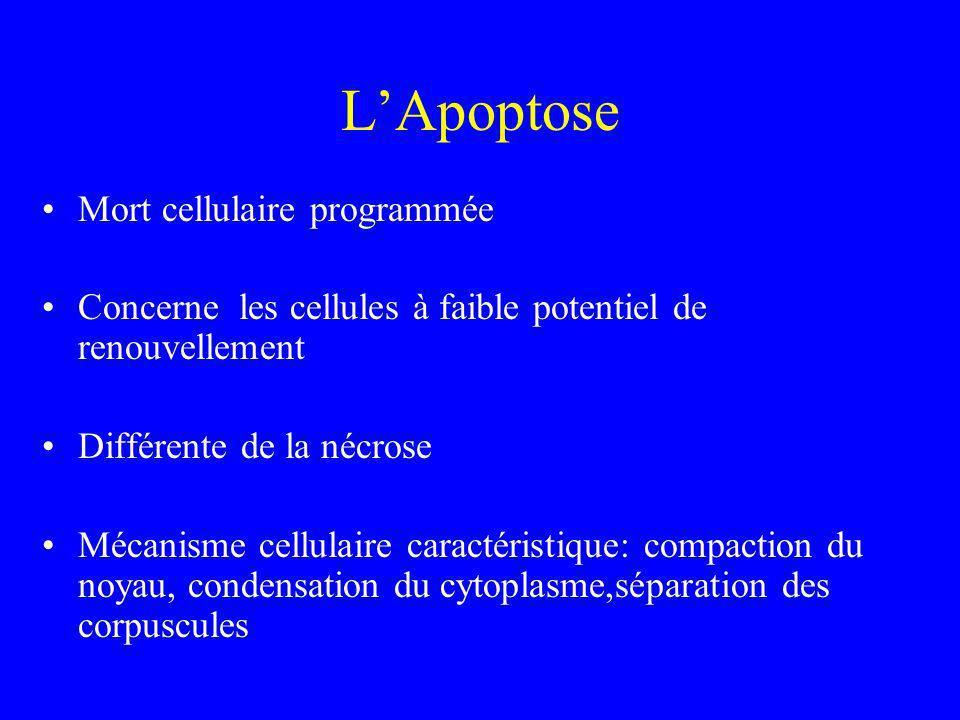 L'Apoptose Mort cellulaire programmée