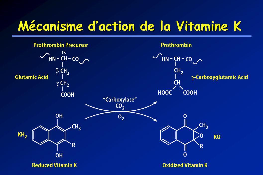 Mécanisme d'action de la Vitamine K