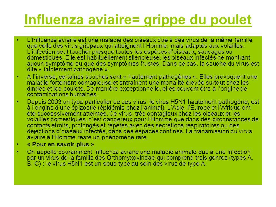 Influenza aviaire= grippe du poulet