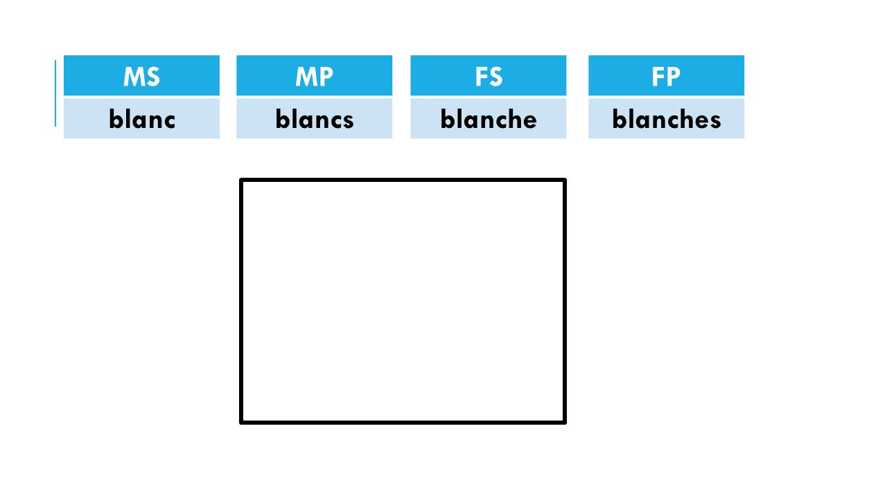 MS blanc MP blancs FS blanche FP blanches