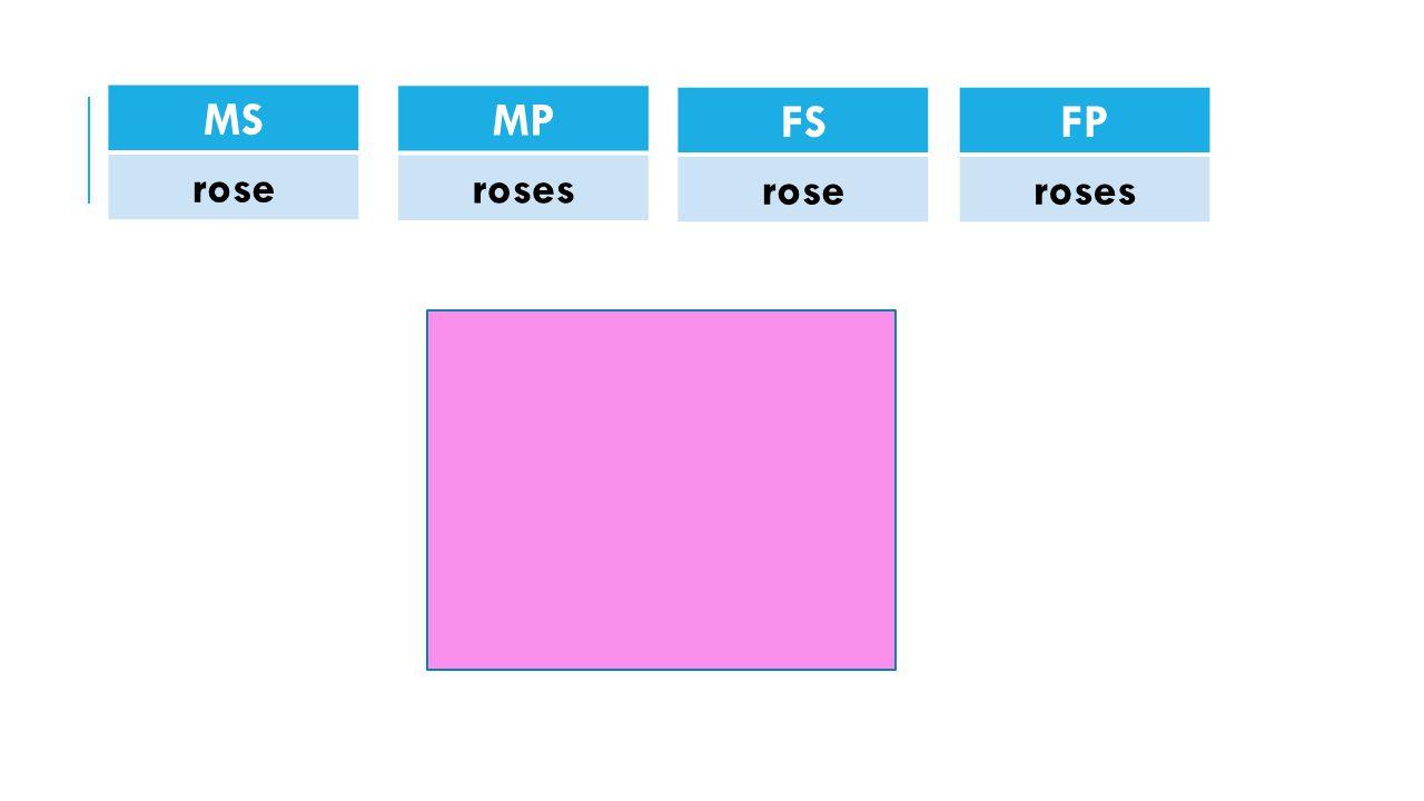 MS rose MP roses FS rose FP roses