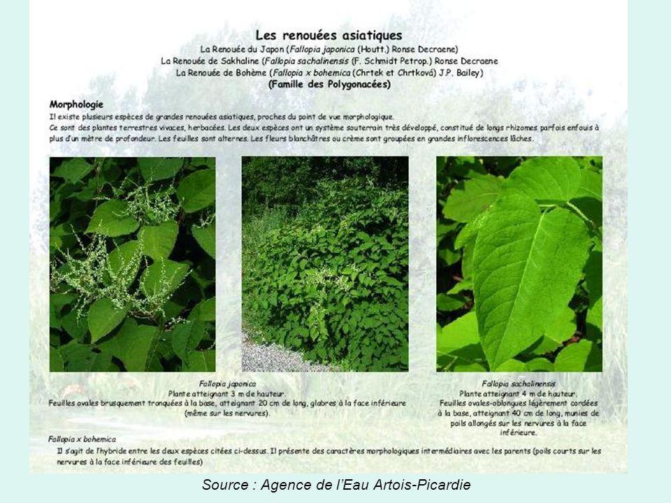 Source : Agence de l'Eau Artois-Picardie