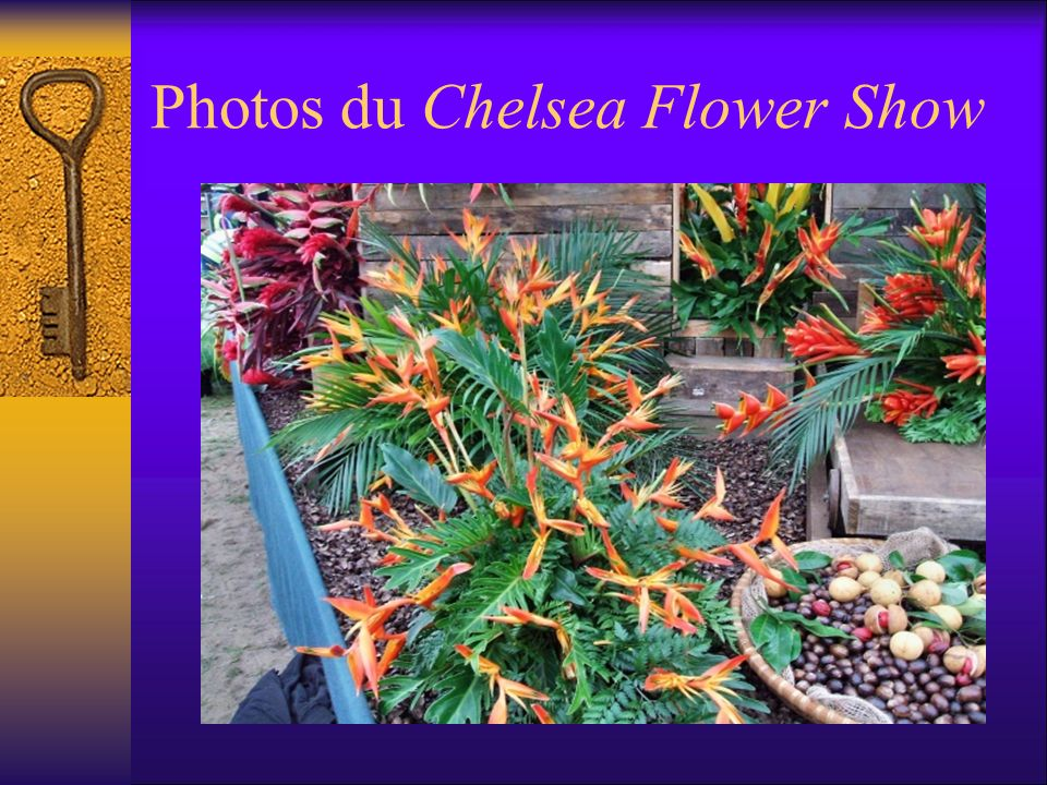Photos du Chelsea Flower Show