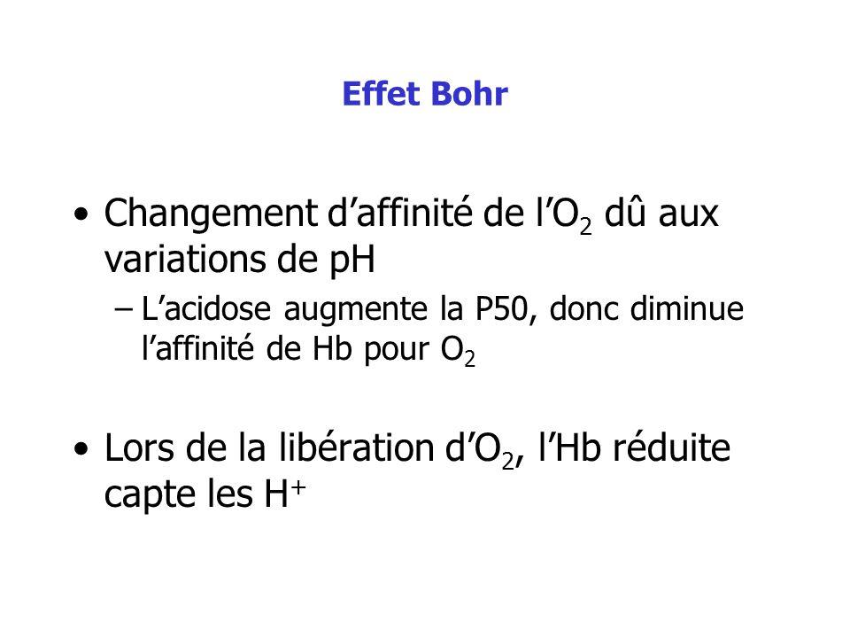 Changement d'affinité de l'O2 dû aux variations de pH