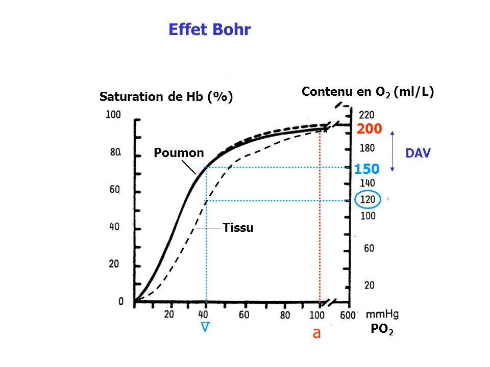 Effet Bohr _ v a 200 150 Contenu en O2 (ml/L) Saturation de Hb (%)