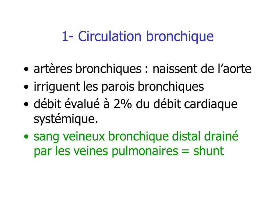 1- Circulation bronchique