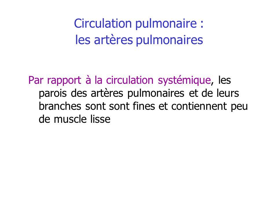 Circulation pulmonaire : les artères pulmonaires
