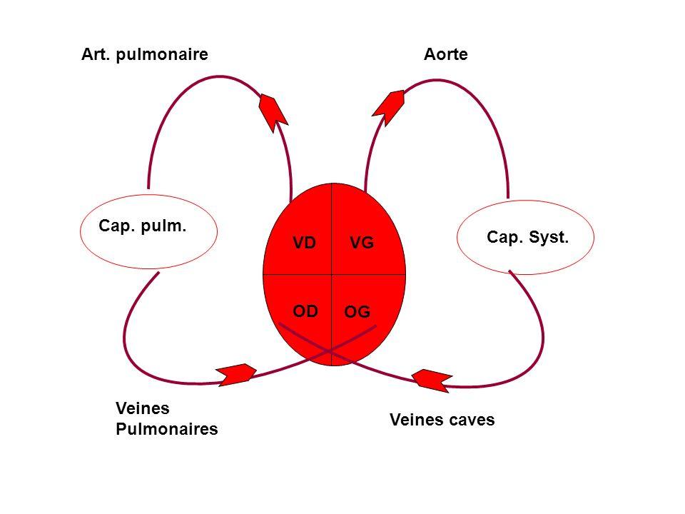 Art. pulmonaire Aorte Cap. pulm. Cap. Syst. VD VG OD OG Veines Pulmonaires Veines caves