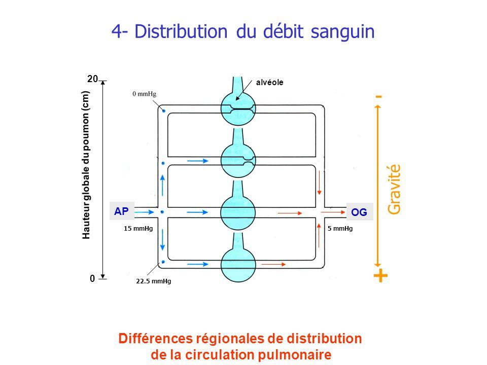 4- Distribution du débit sanguin