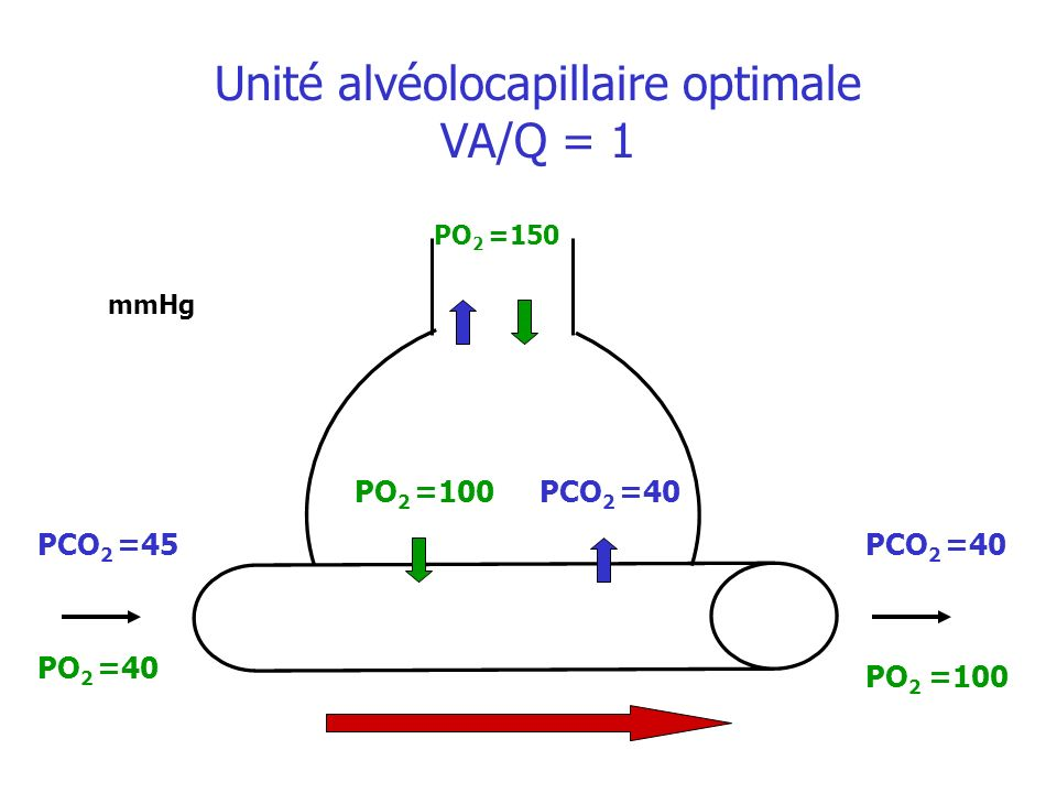Unité alvéolocapillaire optimale VA/Q = 1