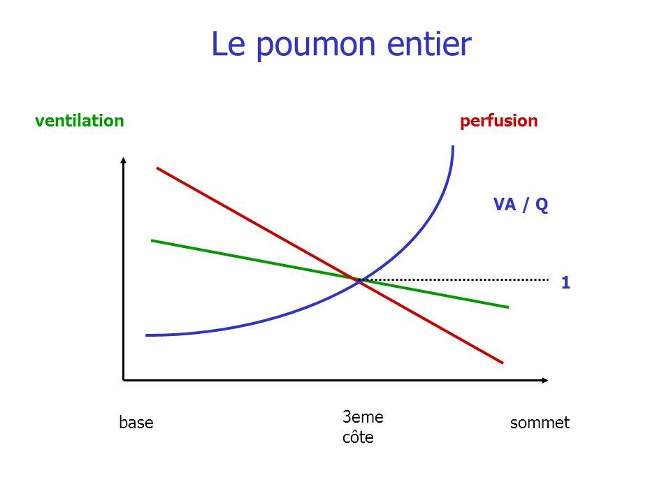 Le poumon entier ventilation perfusion VA / Q 1 3eme côte base sommet