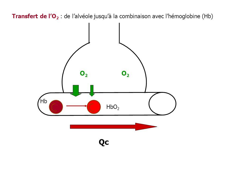 Transfert de l'O2 : de l'alvéole jusqu'à la combinaison avec l'hémoglobine (Hb)