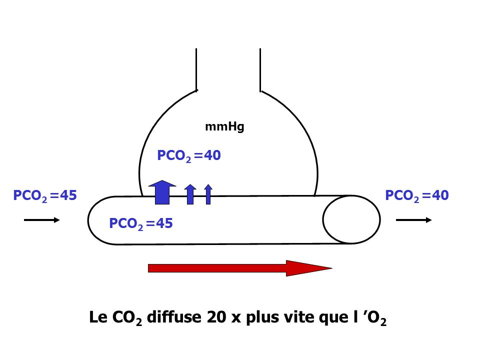 Le CO2 diffuse 20 x plus vite que l 'O2
