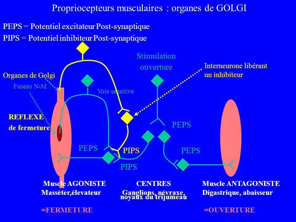 Ganglions, névraxe, noyaux du trijumeau
