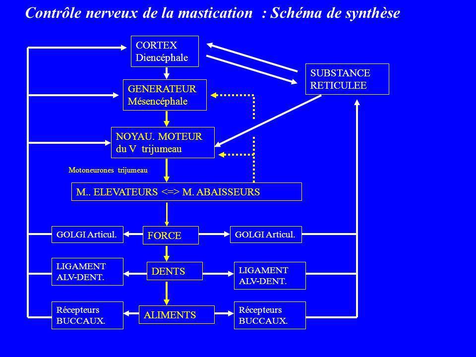 Contrôle nerveux de la mastication : Schéma de synthèse