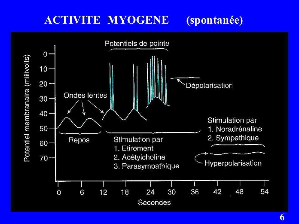 ACTIVITE MYOGENE (spontanée)