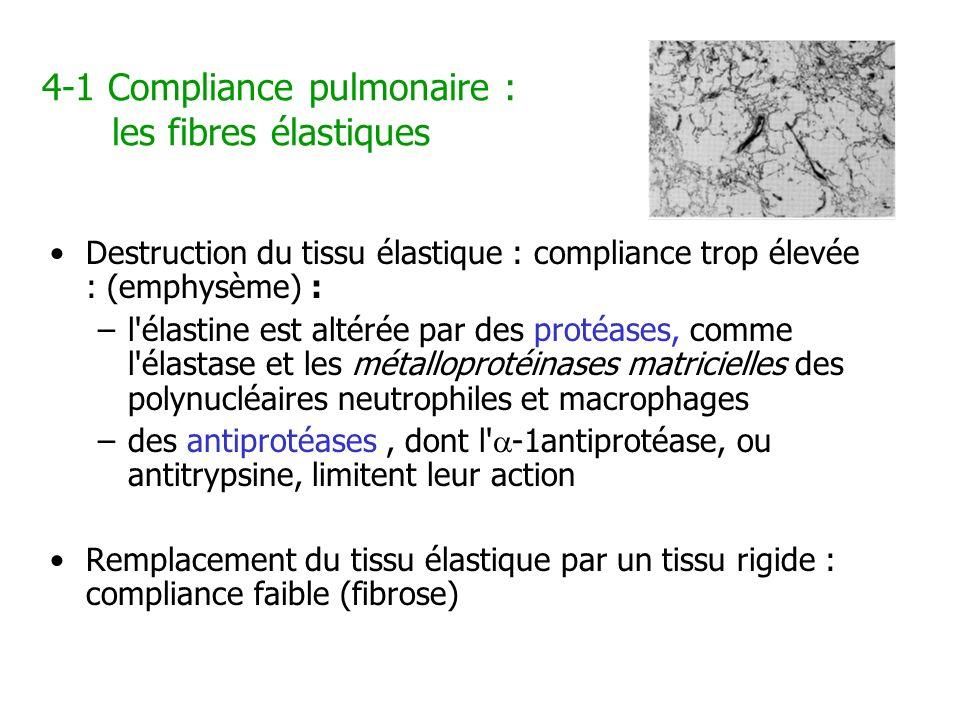 4-1 Compliance pulmonaire : les fibres élastiques