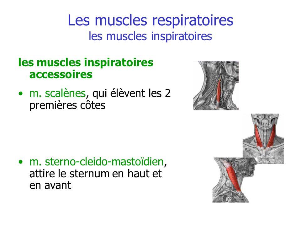 Les muscles respiratoires les muscles inspiratoires