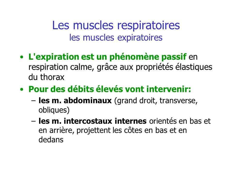 Les muscles respiratoires les muscles expiratoires