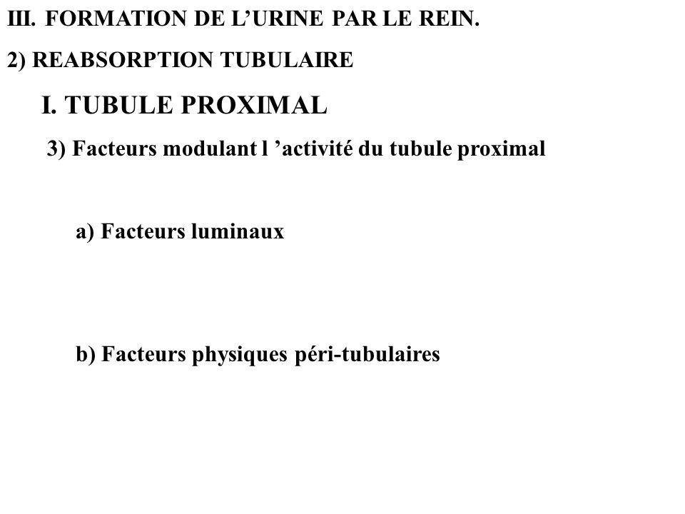 III. FORMATION DE L'URINE PAR LE REIN.