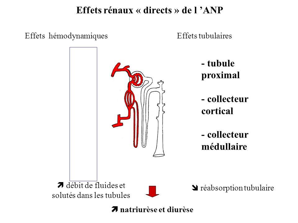 Effets rénaux « directs » de l 'ANP
