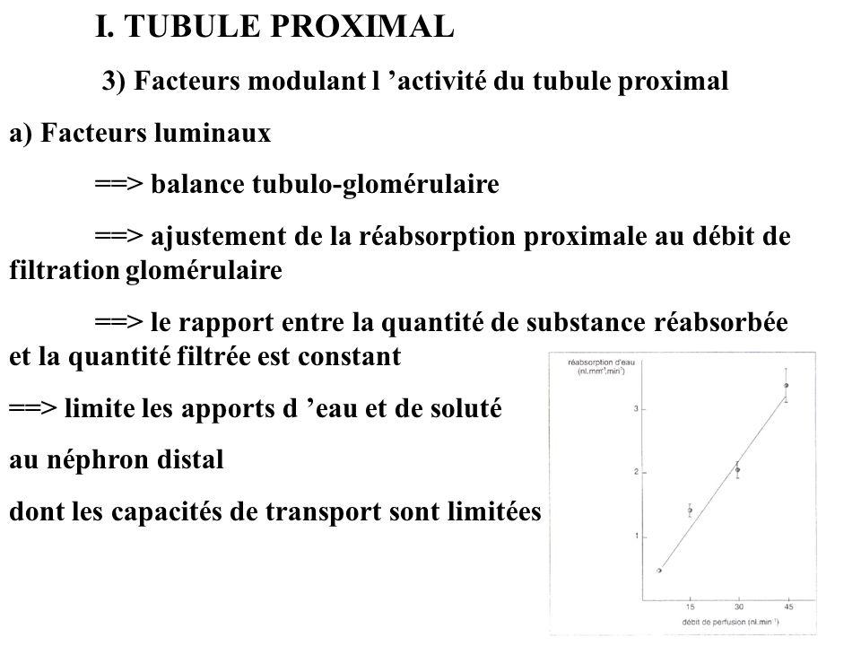 I. TUBULE PROXIMAL 3) Facteurs modulant l 'activité du tubule proximal. a) Facteurs luminaux. ==> balance tubulo-glomérulaire.