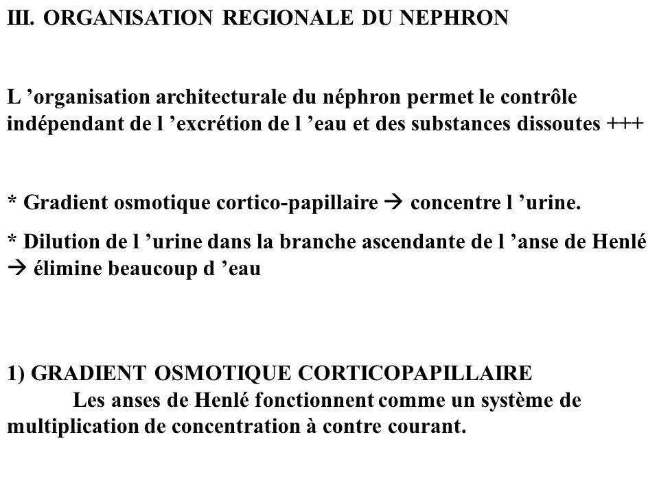 III. ORGANISATION REGIONALE DU NEPHRON