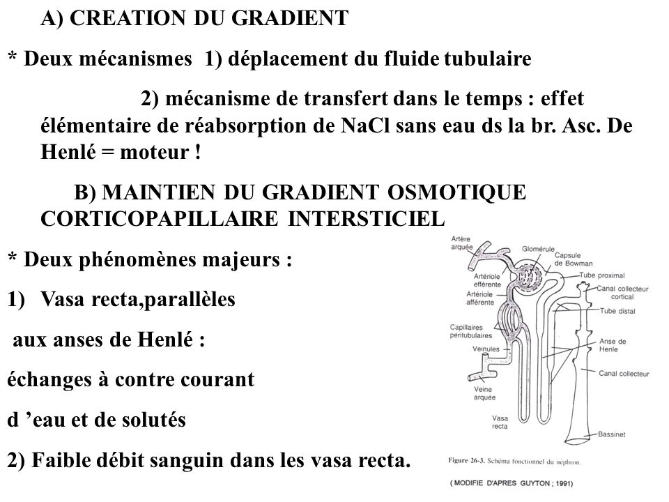 A) CREATION DU GRADIENT