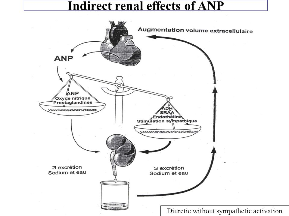 Indirect renal effects of ANP
