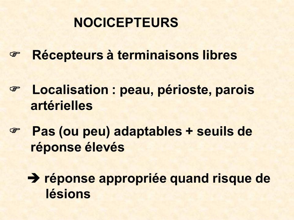 NOCICEPTEURS F Récepteurs à terminaisons libres. F Localisation : peau, périoste, parois. artérielles.