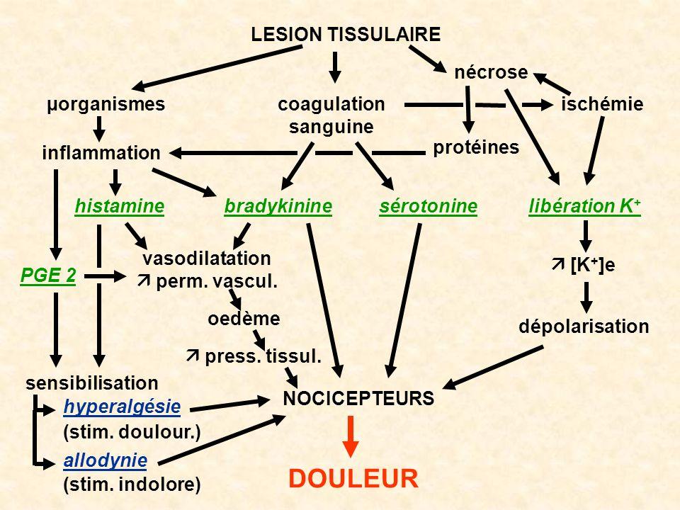 DOULEUR LESION TISSULAIRE nécrose µorganismes coagulation sanguine