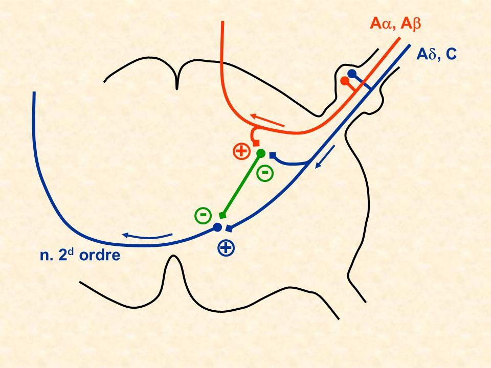 Aa, Ab Ad, C + - - + n. 2d ordre