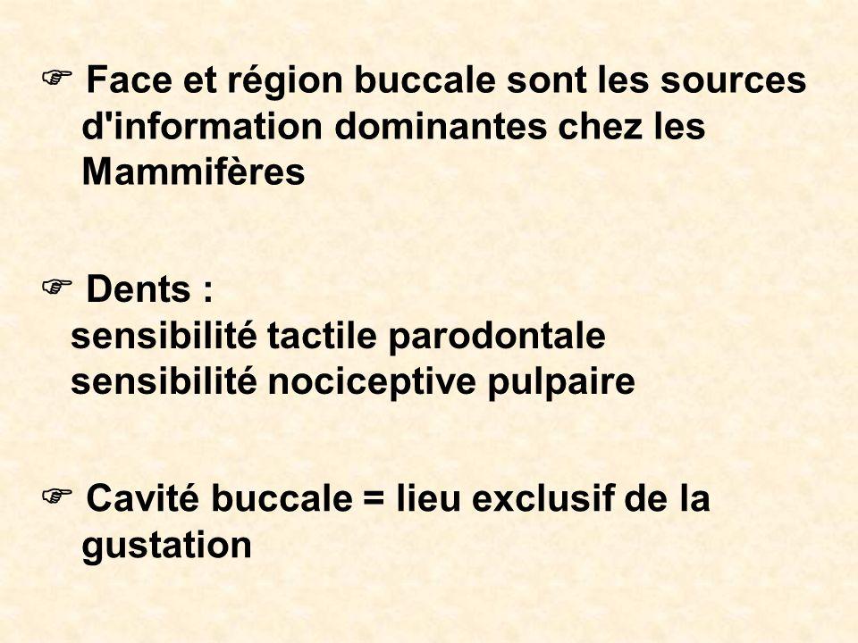 F Face et région buccale sont les sources