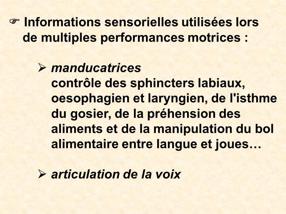 F Informations sensorielles utilisées lors