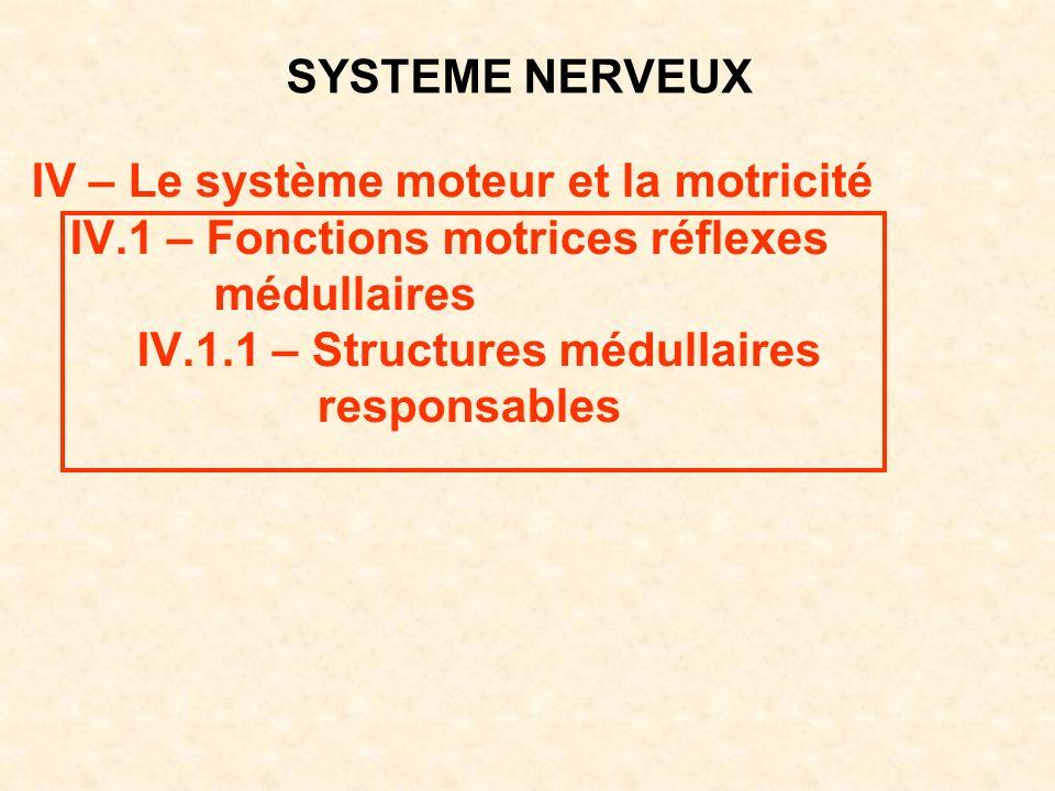 SYSTEME NERVEUX IV – Le système moteur et la motricité. IV.1 – Fonctions motrices réflexes. médullaires.