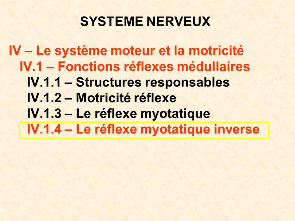 SYSTEME NERVEUX IV – Le système moteur et la motricité. IV.1 – Fonctions réflexes médullaires. IV.1.1 – Structures responsables.