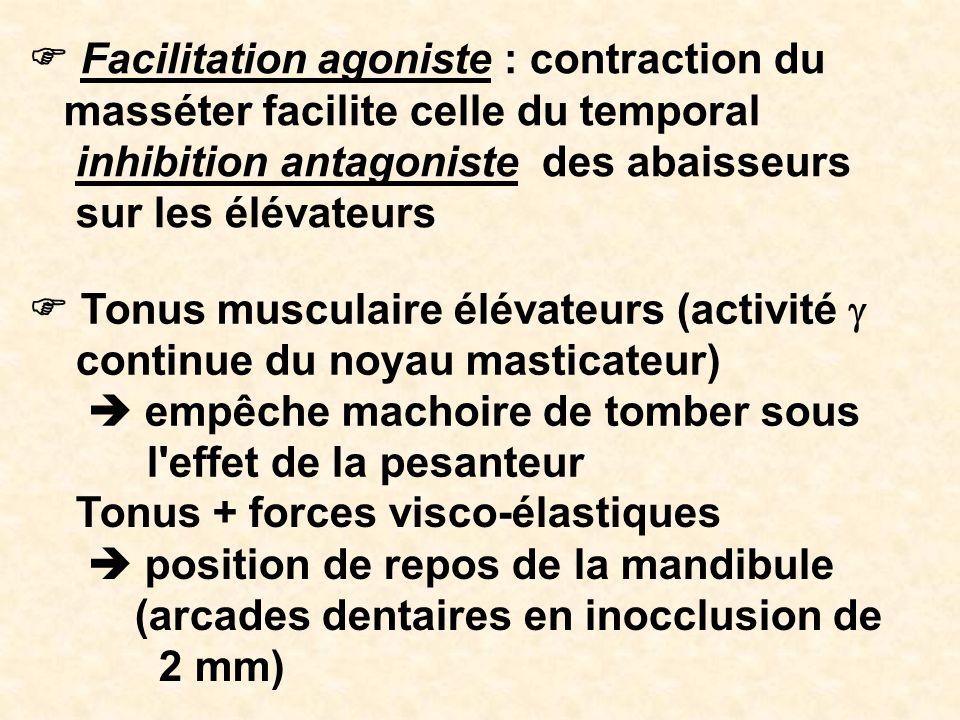 F Facilitation agoniste : contraction du