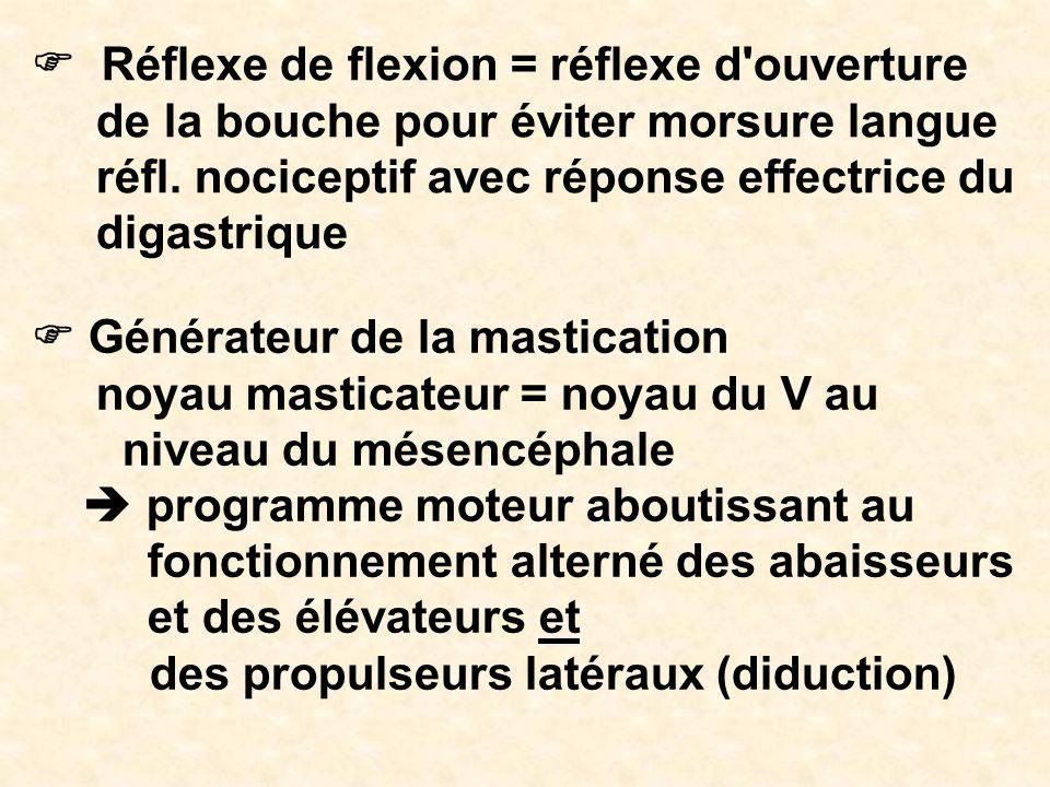 F Réflexe de flexion = réflexe d ouverture