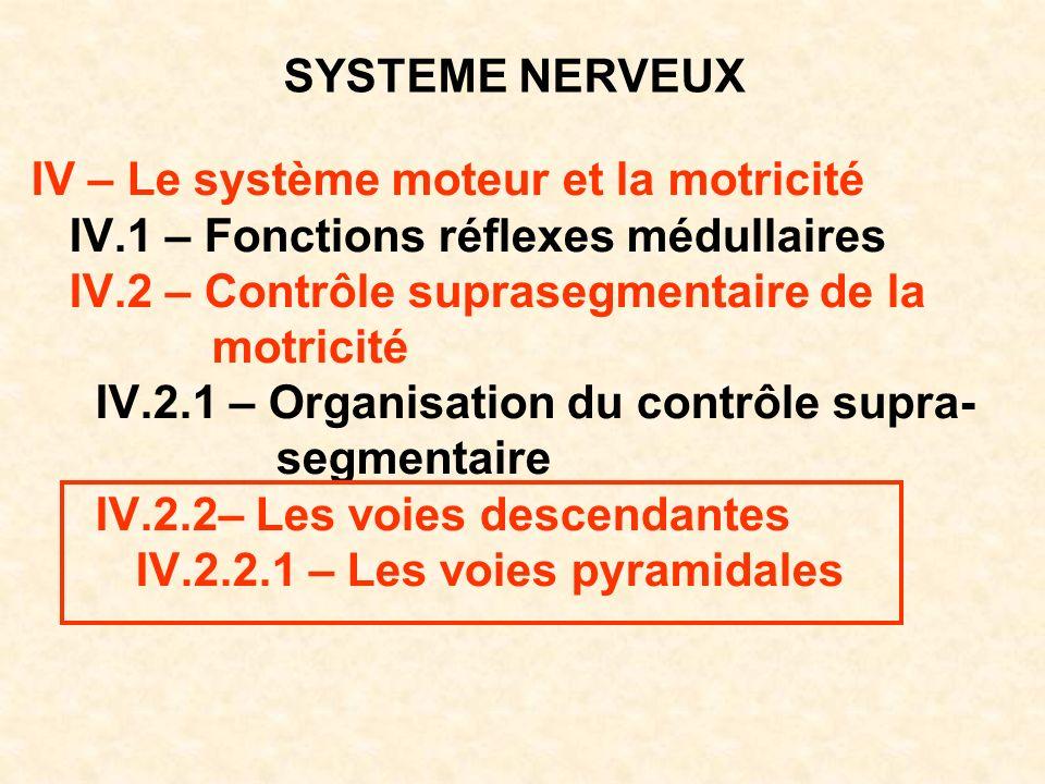 SYSTEME NERVEUX IV – Le système moteur et la motricité. IV.1 – Fonctions réflexes médullaires. IV.2 – Contrôle suprasegmentaire de la.