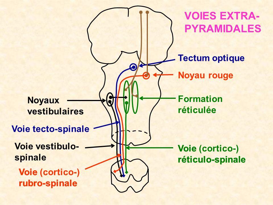 VOIES EXTRA-PYRAMIDALES