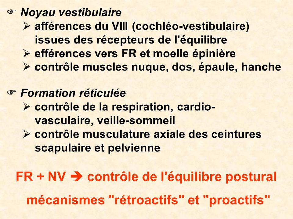 FR + NV  contrôle de l équilibre postural