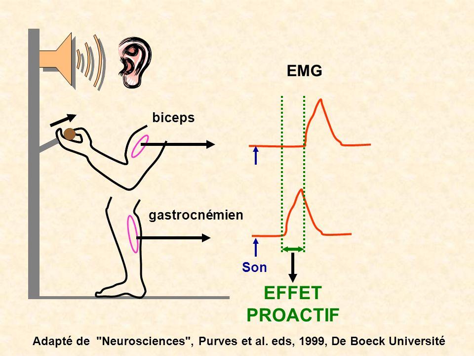 EFFET PROACTIF EMG biceps gastrocnémien Son