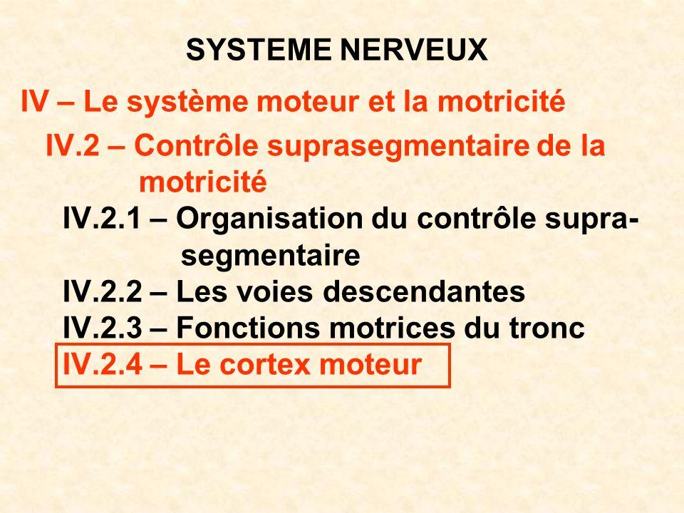 SYSTEME NERVEUX IV – Le système moteur et la motricité. IV.2 – Contrôle suprasegmentaire de la. motricité.
