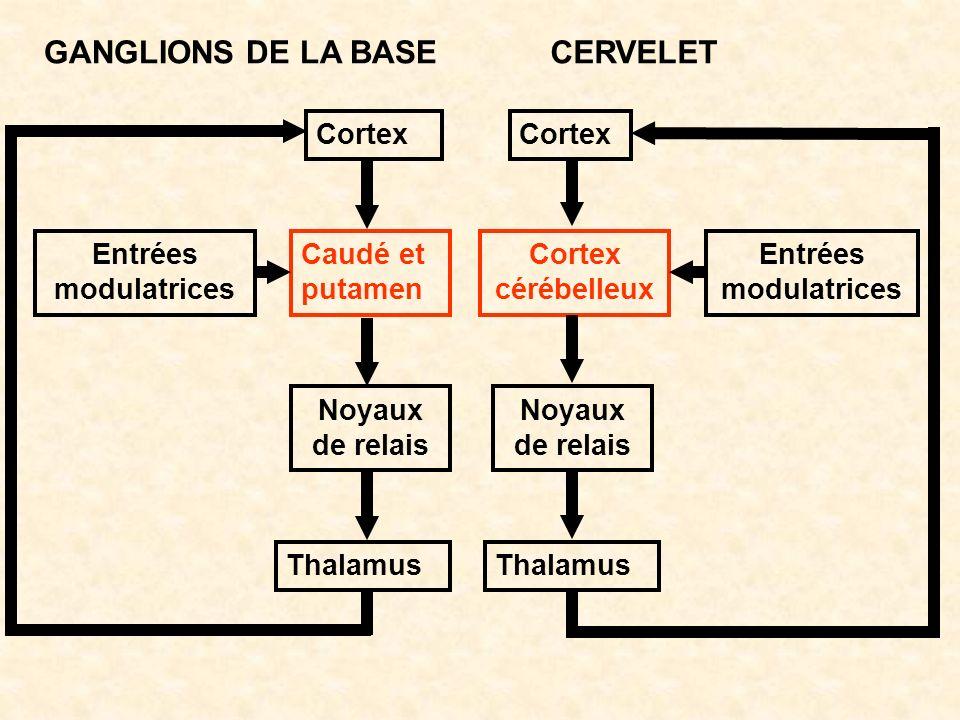 GANGLIONS DE LA BASE CERVELET Cortex Cortex Entrées modulatrices